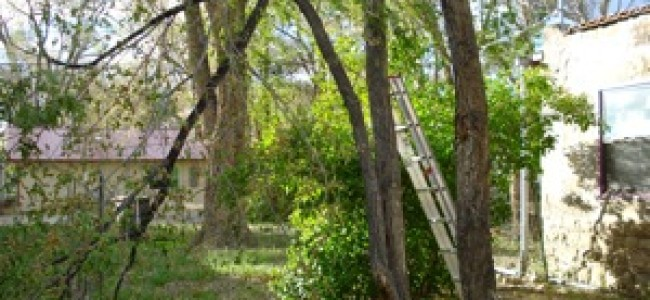 Downing Trees – Prepping the Area to Build