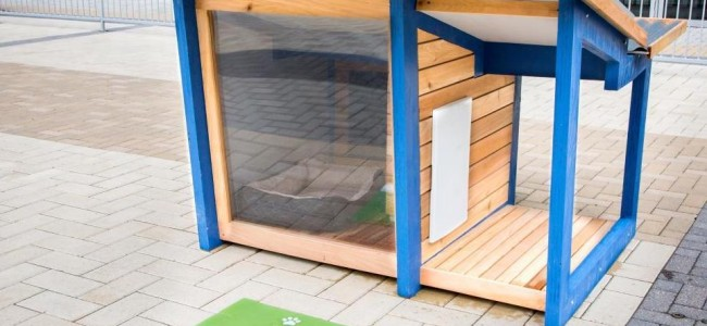 Low Maintenance Passive Solar Dog House
