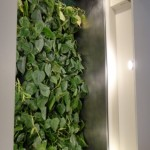 The plants are integrated into the HVAC of the Solar Decathlon home.