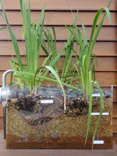 Plant Filtration System